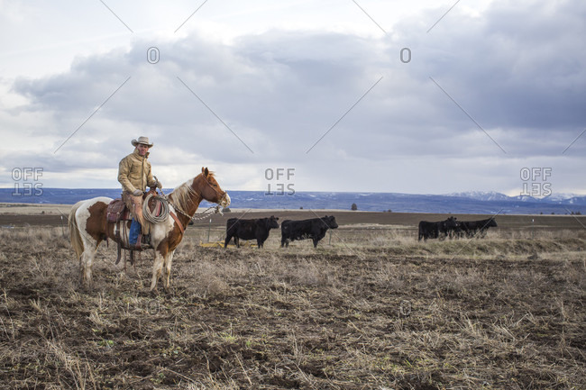 February 22, 2017: Clouds over rancher herding cattle on horse and looking at camera, Oregon, USA