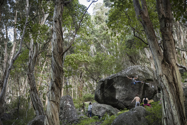 Woman climbing boulder in forest, others watching, Oahu, Hawaii, USA