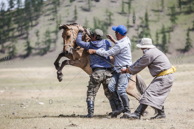 June 24, 2017: Men trying to tame bucking bronco horse, Bunkhan, Bulgan, Mongolia