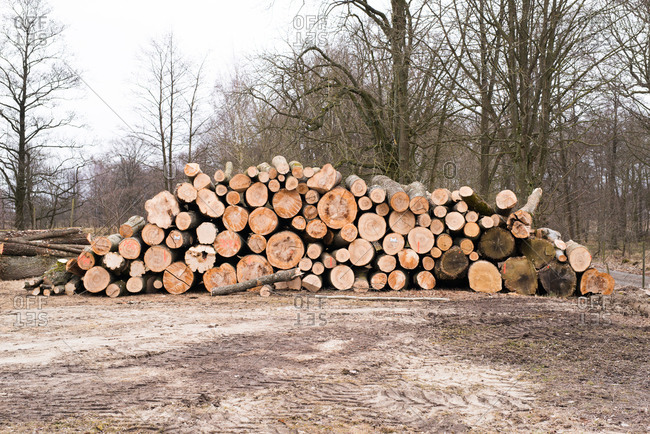 Large pile of logs stacked outdoors