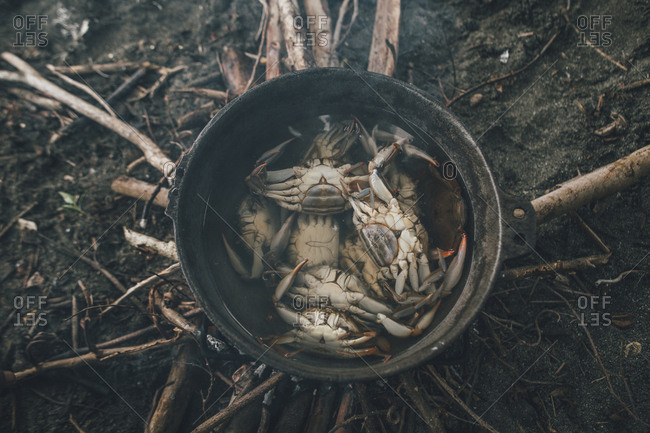 Crabs caught in a pot with water