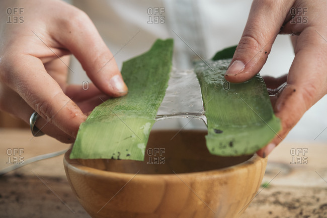 Close-up of woman holding the pulp of the pods of an aloe vera