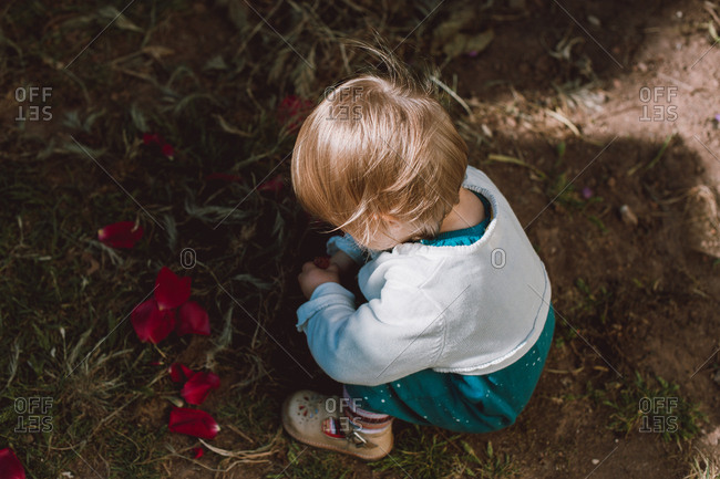 Looking down on toddler crouching in garden examining flower petals