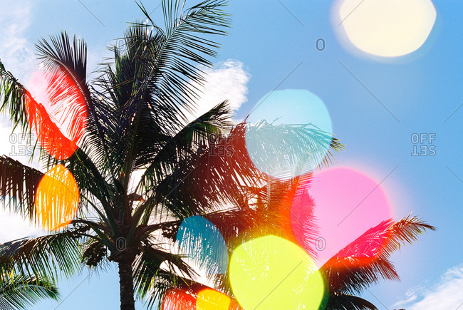 Looking up at palm fronds through splashes of colored lens flare