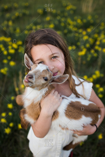 High angle view of young girl holding baby goat in arms