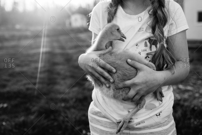 Close up of young girl holding baby goose in her arms