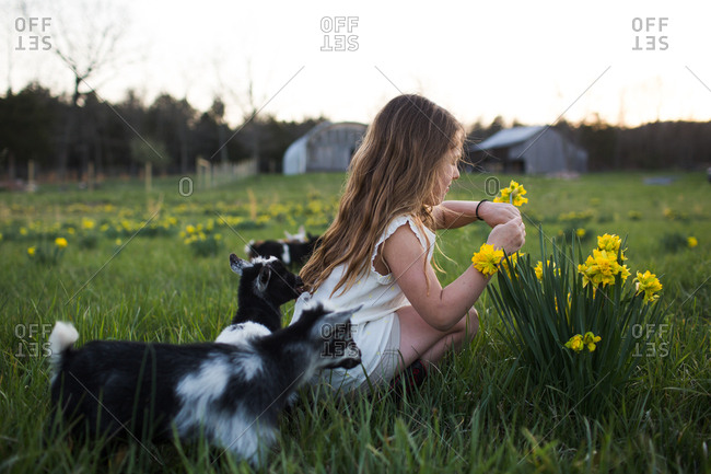 Young girl picking flowers in field with baby goats