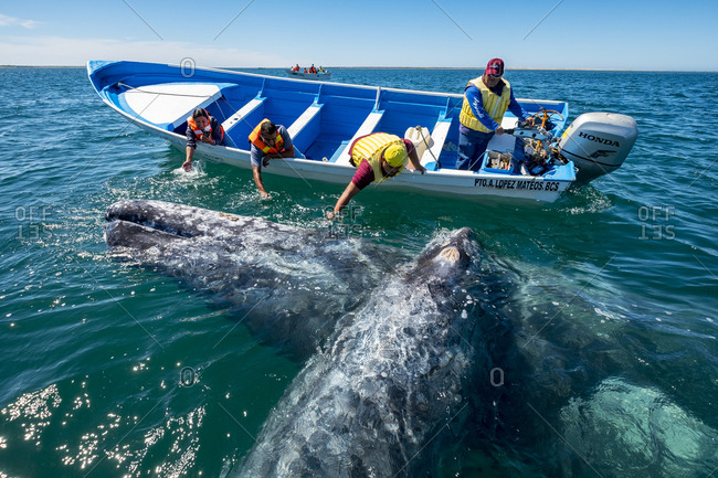 March 9, 2018: Group of boat passengers reaching to pet whales in Baja California Sur in Mexico