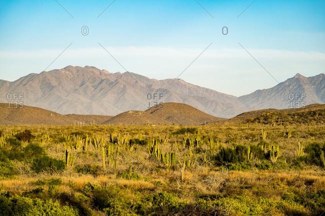 Desert in Baja California Sur in Mexico