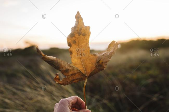 Hand holding crisp autumn leaf at Oregon coat