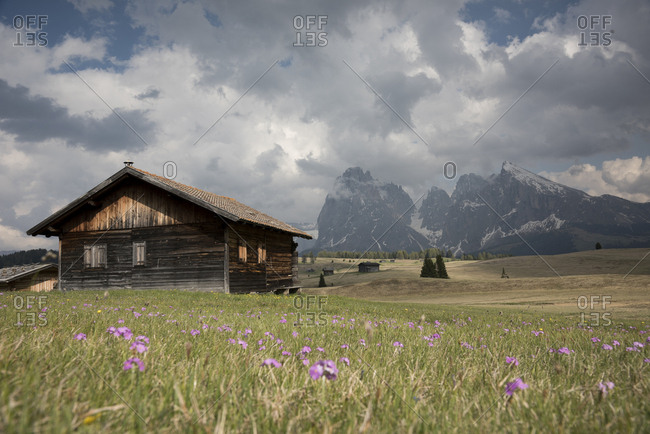 View of Sassolungo and Sassopiatto mounts from Alpe di Siusi or Seiser Alm, dolomites, Trentino Alto Adige, Italy