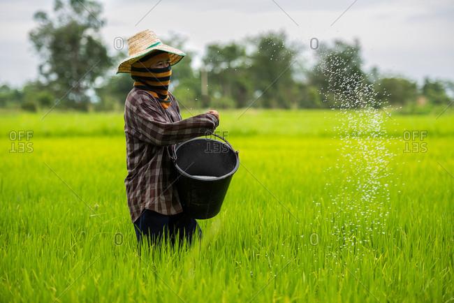April 22, 2018: Farmer planting rice in Chiang Rai, Thailand