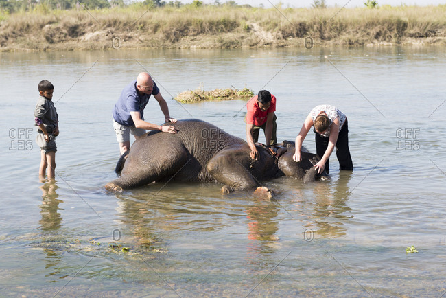 Nepal - June 7, 2012: Tourists in river with elephant, Chitwan National Park, Nepal