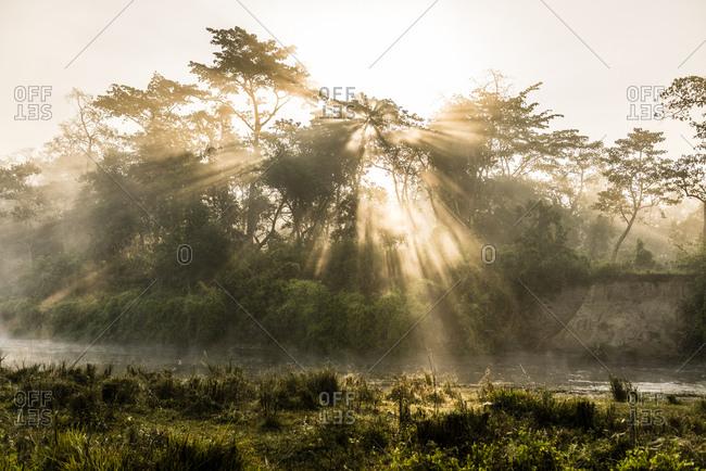 Sunrise over trees in Chitwan National Park, Nepal