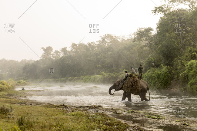 Nepal - June 15, 2012: Working Elephant carrying a load through river, Chitwan National Park, Nepal