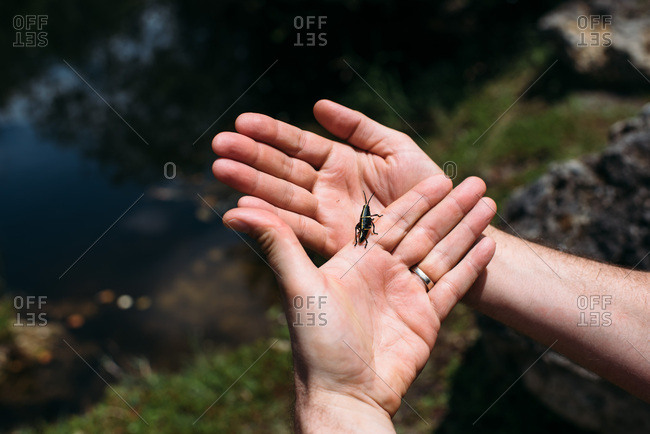 Hands holding crickets outside in Florida