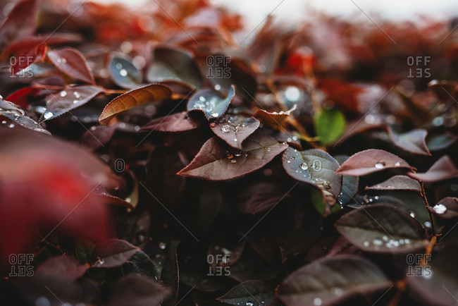 Close up of rain drops sitting on leaves