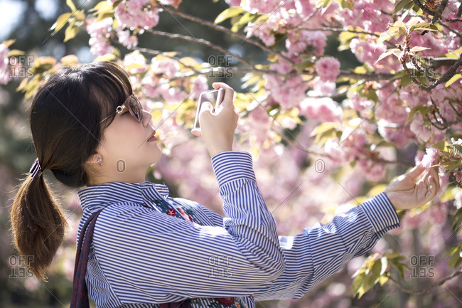 A woman taking a picture of a double cherry blossom flower