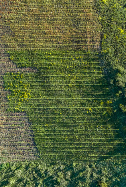 Aerial view of agricultural field at Karditsa region, Greece
