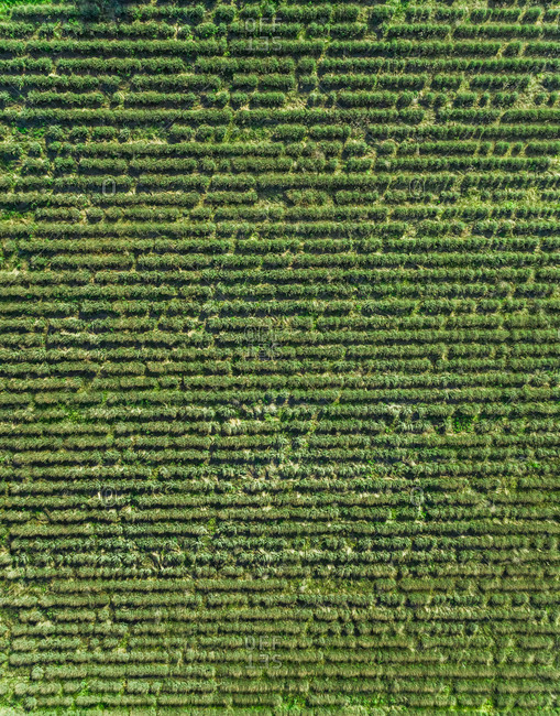 Aerial view of agriculture field at beautiful Karditsa region in Greece
