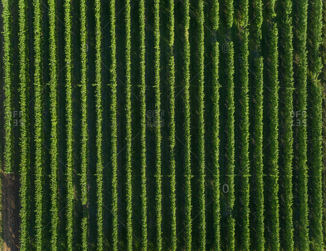 Aerial view of agricultural field at beautiful Karditsa region, Greece