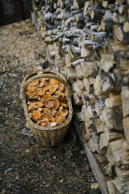 Basket filled with mushroom by a of stacked firewood