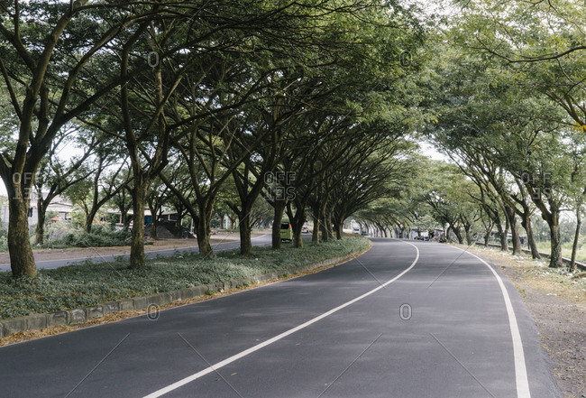 Tree lined curving street