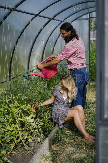 Couple tending to plants in greenhouse