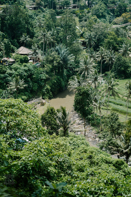 River and palm trees in Bali, Indonesia