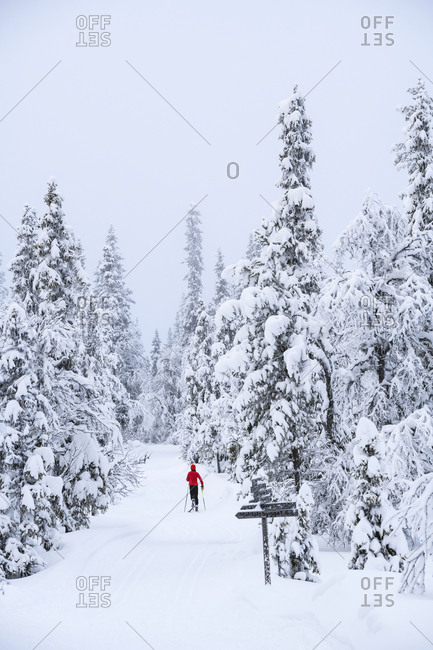 Skier in forest