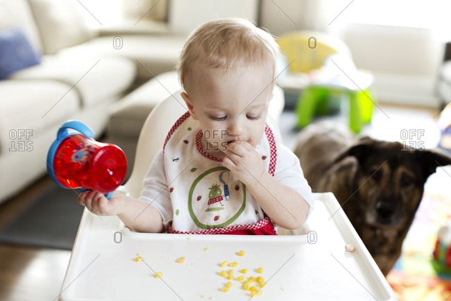 Blonde baby eating in a high chair at home as a German Shepherd looks on