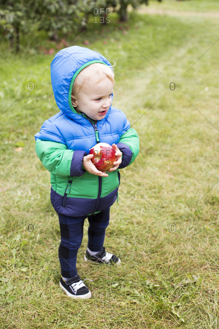 Toddler eating an apple at an orchard