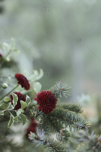 Floral decoration in Christmas tree