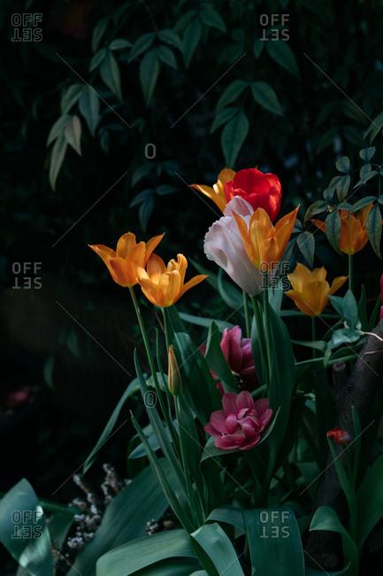 Various vibrant flowers in corner of shadowy garden