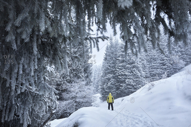 Rear view of male hiker standing on snow covered field in forest