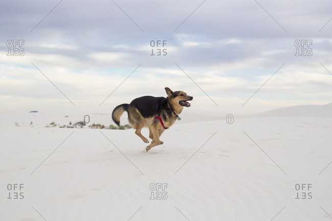 Full length of dog running against cloudy sky at White Sands National Monument