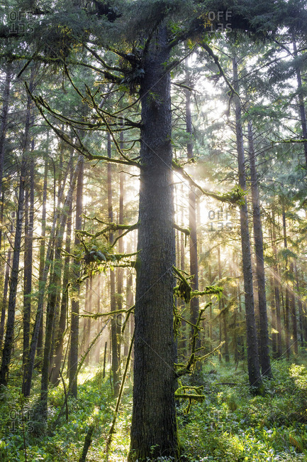 Trees and plants growing in Redwood National and State Parks