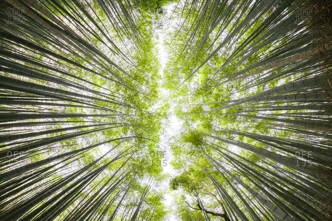 Low angle view of bamboo grove against sky in forest