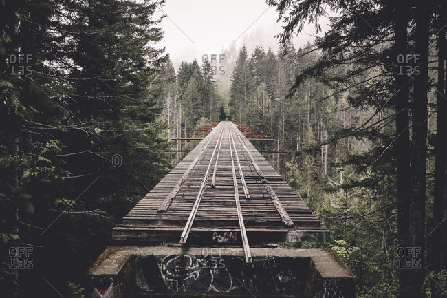 Abandoned railway bridge amidst trees in forest