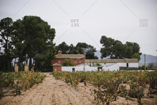 Vineyard and farmhouse