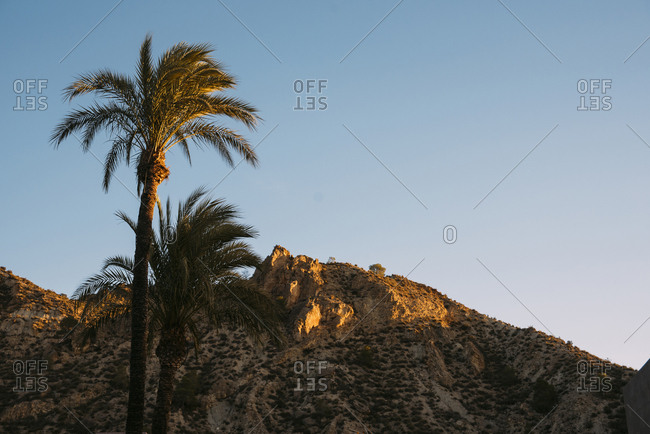 Mountain peak with palm trees in foreground