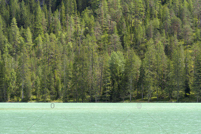 Green waters of Lago di Landro and treelined shoreline at Dobbiaco in the Dolomites in Alto Adige, South Tyrol, Italy