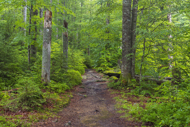 Trail through forest after rain at Waldhauser in the Bavarian Forest National Park in Bavaria, Germany