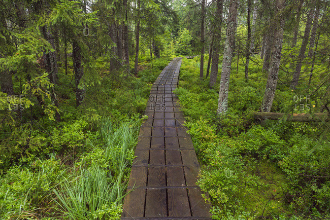 Boardwalk through forest after rain at Spiegelau in the Bavarian Forest National Park in Bavaria, Germany