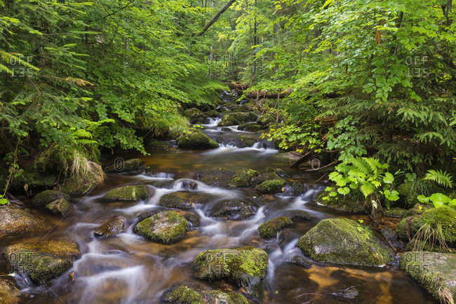 Mountain stream after rain at Kleine Ohe at Waldhauser in the Bavarian Forest National Park in Bavaria, Germany