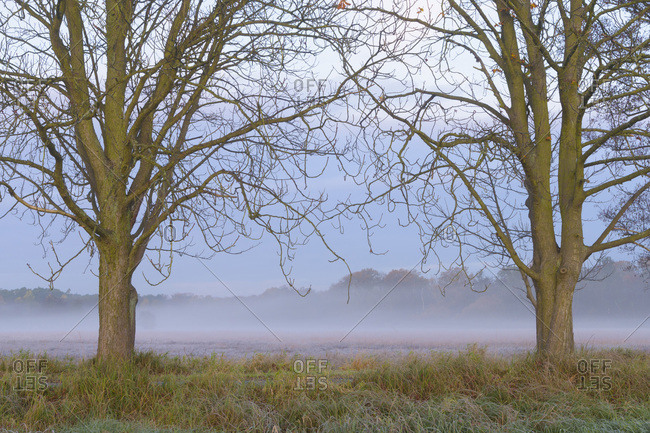 Bare trees framing misty meadow at dawn in Autumn in Hesse, Germany