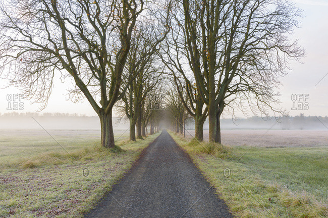 Chestnut tree-lined road on a misty morning in Autumn in Hesse, Germany