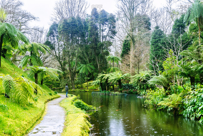 Azores- Sao Miguel- Landscape of lake and forest in Furnas