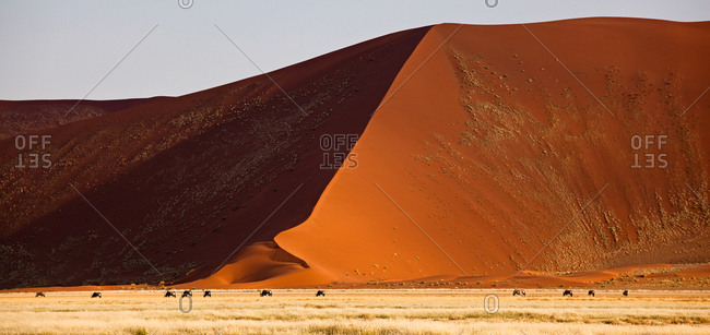 A herd of Oryx and high sand dunes in the Namib-Naukluft National Park, Namibia