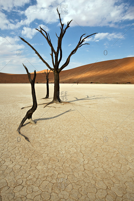 Skeleton trees and parched ground in Deadvlei, which is a famous White Clay Pan inside the Namib-Naukluft National Park, Namibia